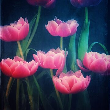Pink Tulips by winggleam