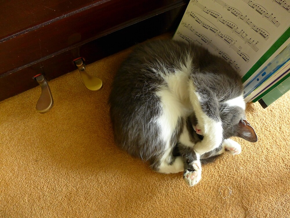 Shadow sleeping under the piano by Anna Myerscough