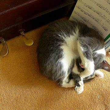 Shadow sleeping under the piano by AnnaMyerscough