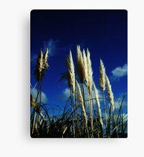 Sea Ferns Canvas Print