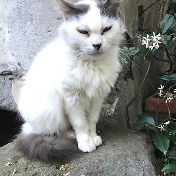 Fluffy Kitty by vwells