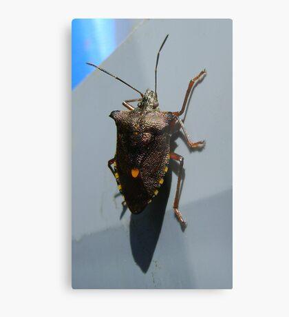 Forest Bug, Pentatoma rufipes Metal Print