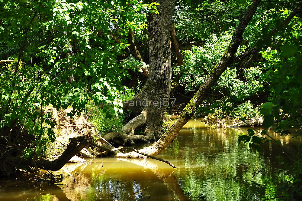 forest and river by andrej67