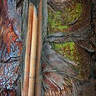 Palm Textures  by CarolM