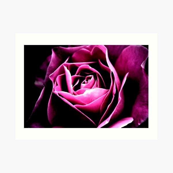 Twilight Rose Art Print