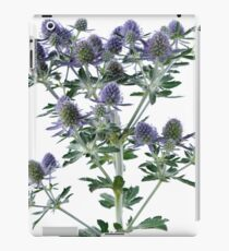 Eryngium planum  'Blue Hobbit'  Blue eryngo  Sea holly  iPad Case/Skin
