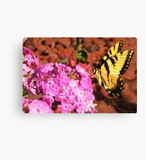 Garden Butterfly II  / Canvas Print