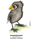 Galápagos Finch by makikelly