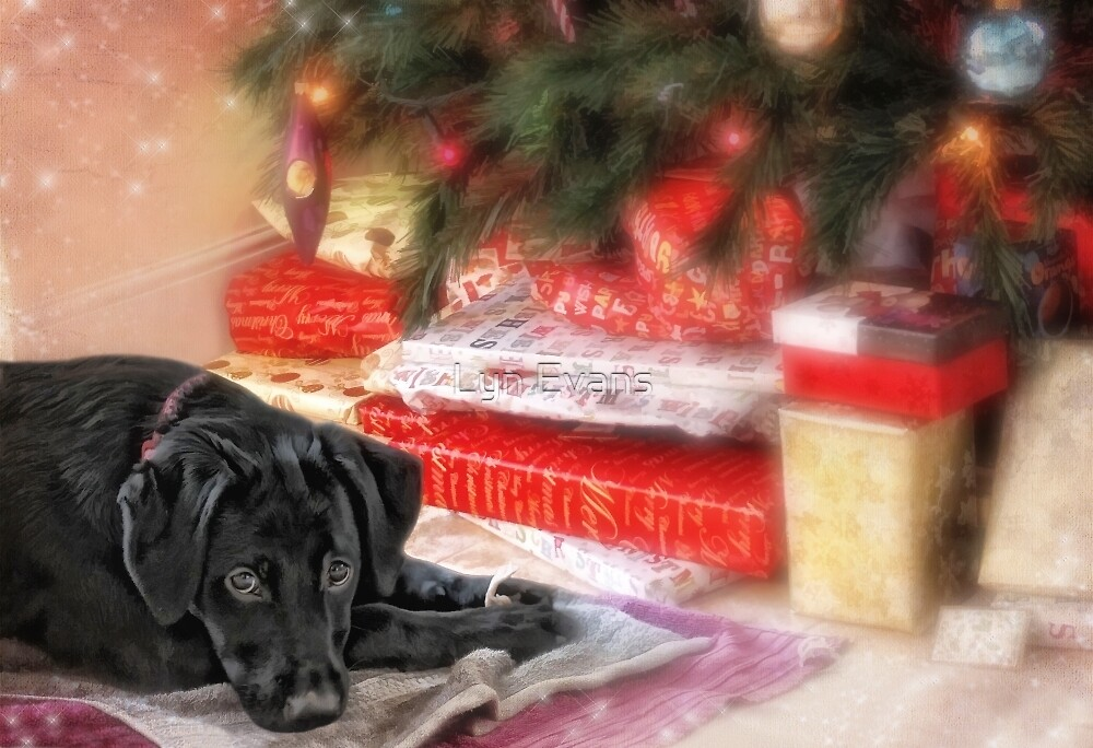 Waiting for Santa...... by Lyn Evans