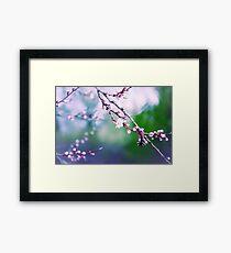 Sakura (3) Framed Print