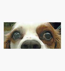 Duffy eyes Photographic Print