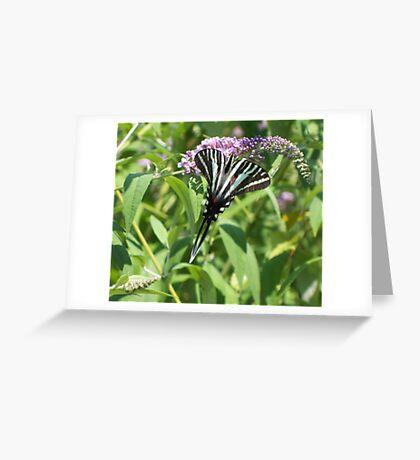Zebra in the bush Greeting Card