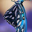 Madam Blue by Donna Adamski