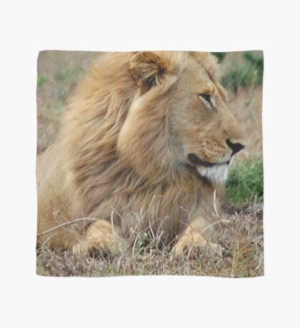 FEELING LONELY - THE LION – Panthera leo Scarf