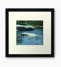 Playful Polar Bears Framed Print