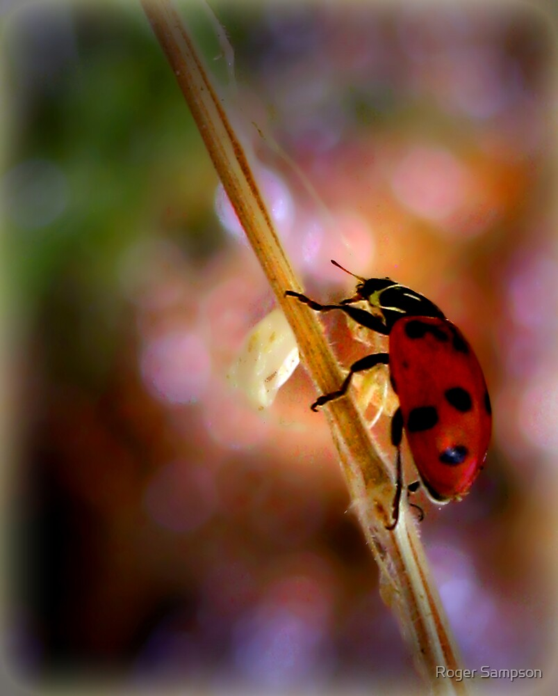 """Hey... a """"Bug"""" Lady! by Roger Sampson"""