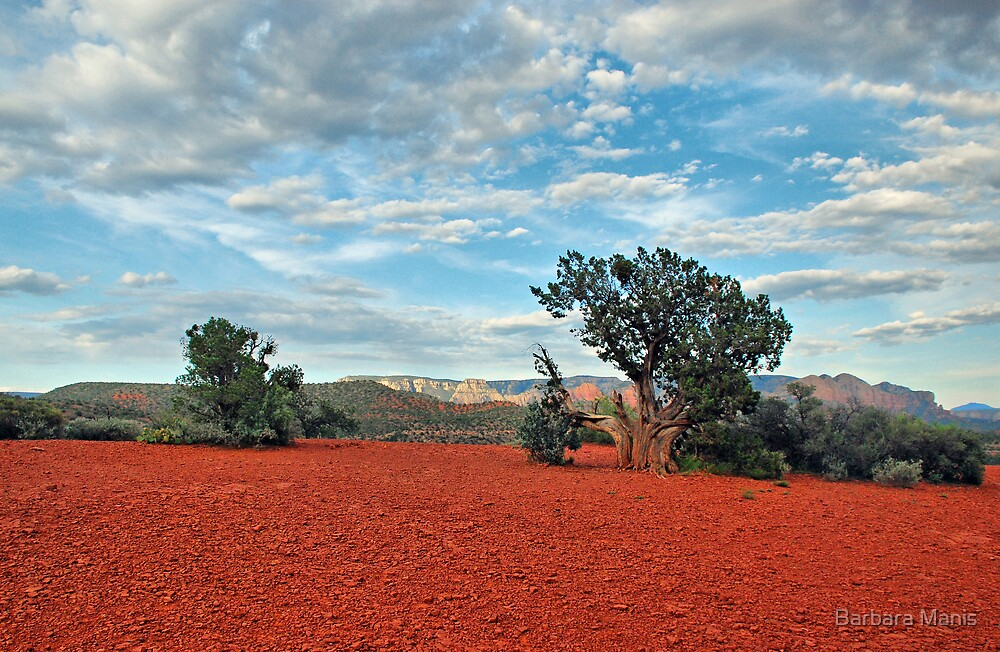 Quot Red Rock Red Soil Quot By Barbara Manis Redbubble