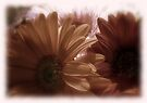 Subdued Gerberas Card by Vanessa Barklay