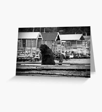 Shaggy Dog Greeting Card