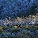 Mourning Gums #1 by Peter Hammer