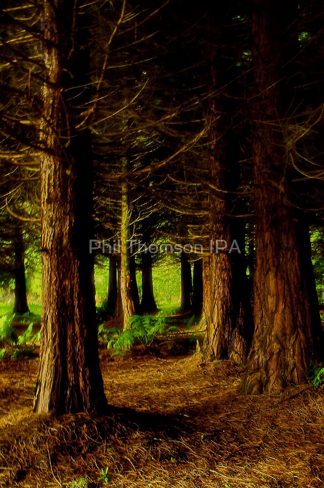 """""""At The Edge Of The Forest"""" by Phil Thomson IPA"""