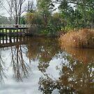 Seven Creek,Euroa by Joe Mortelliti