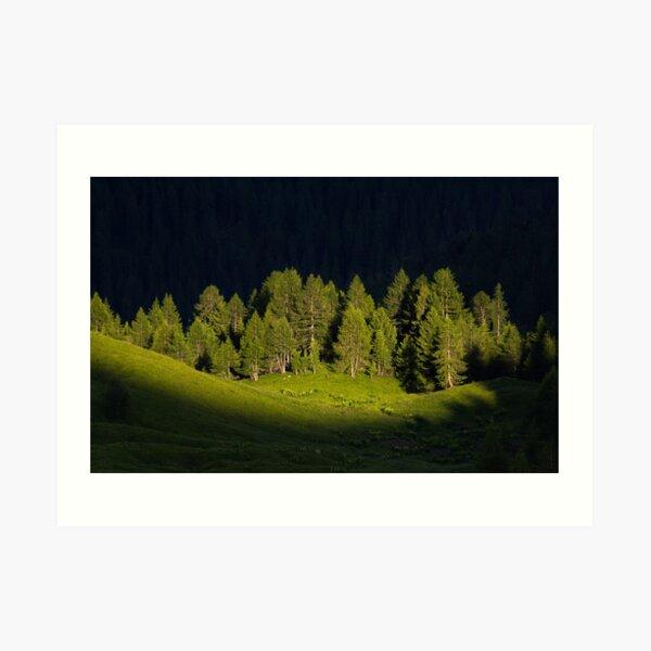 Bäume im Licht Kunstdruck