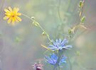 Meadow by Elaine  Manley