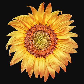 Summer Sunflower by perkinsdesigns