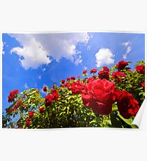 Roses and  Sky. Poster