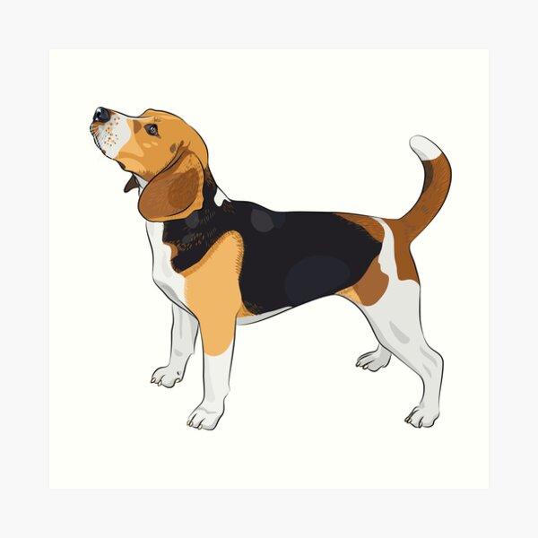 Beagle Lámina artística