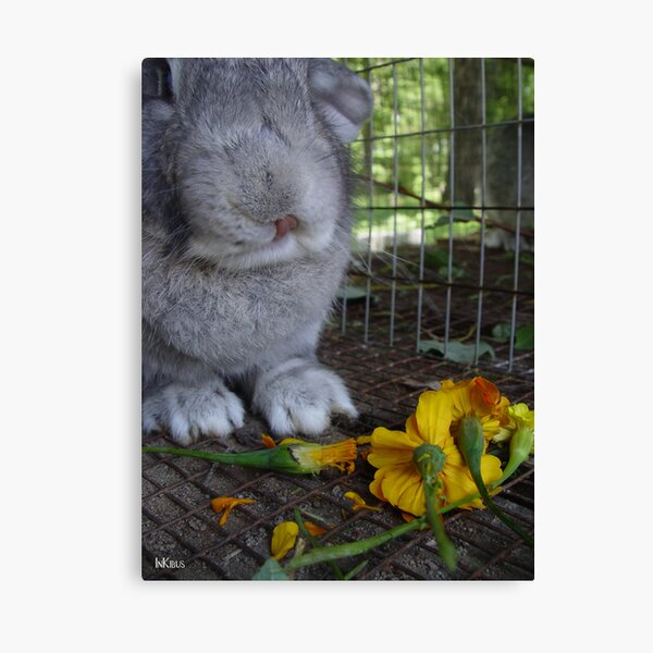 Thanks for the flowers Canvas Print