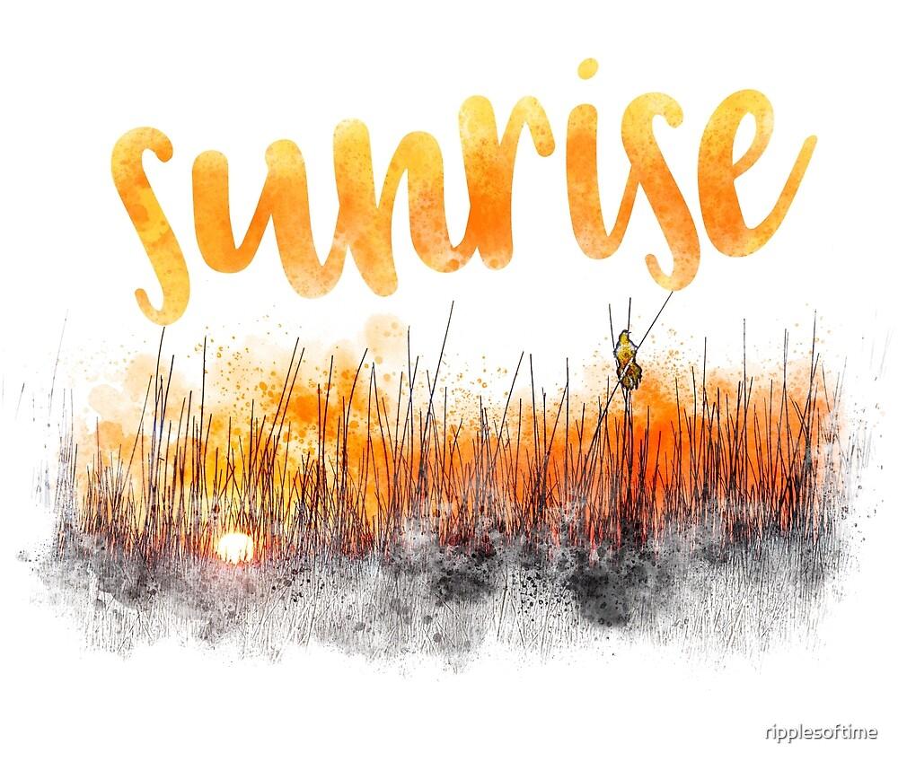 Sunrise with blackbird by ripplesoftime