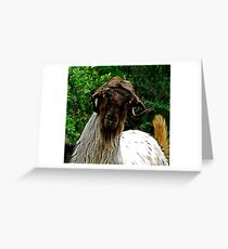 Mohair Goat in Turkey Greeting Card