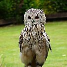 Turkmenian Eagle Owl by LumixFZ28