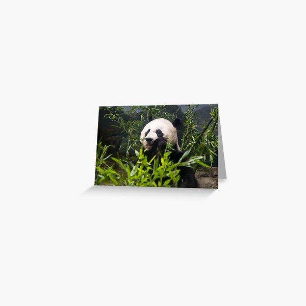 Cute Panda Munching on Bamboo Greeting Card