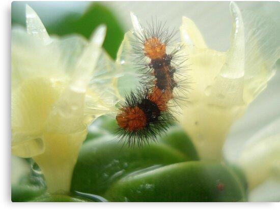 Little Chewi - Orange and black caterpillar by May Lattanzio