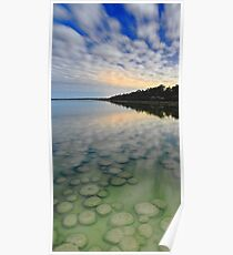 Lake Clifton Thrombolites Under Moonlight  Poster