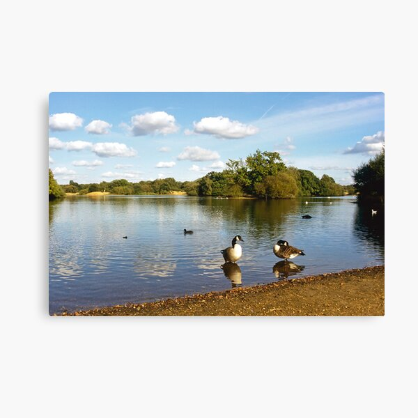 Hollow Ponds, Epping Forest uk Canvas Print