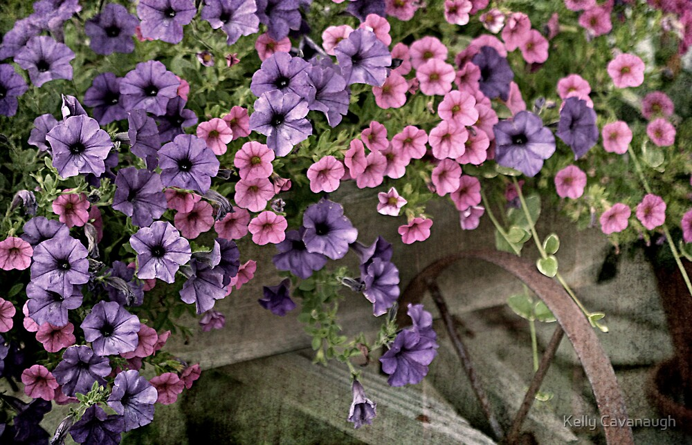 Flower Cart (3) by Kelly Cavanaugh