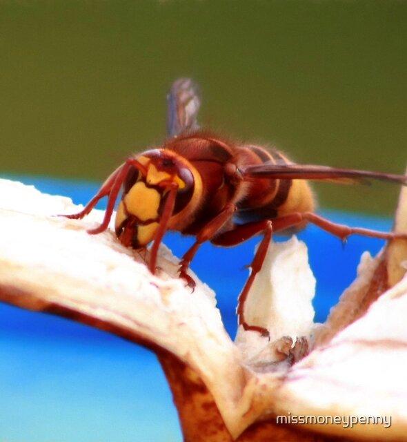 Hungry hornet by missmoneypenny