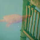 turtle reflection by dbcarolinagirl