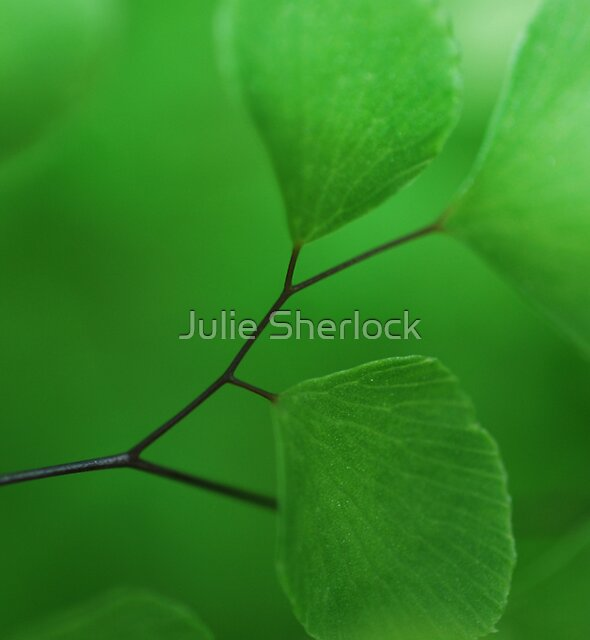 Maidenhair Fern by Julie Sherlock