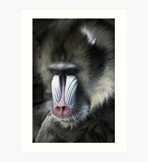 Mummy Baboon Art Print