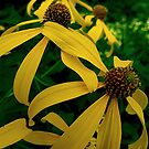 Tall Yellow Coneflower by Vickie Emms