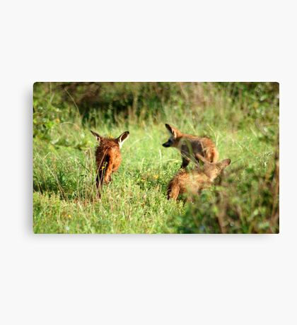 Bat-eared Fox - OTOCYON MEGALOTIS Canvas Print