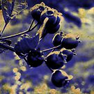 Blue Berries by Lynne Haselden