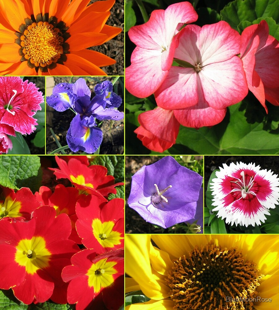 Sunkissed Blumen-Collage von BlueMoonRose