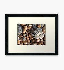 Hello Sweetie! Framed Print
