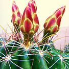 Cactus Promise by Susan McKenzie Bergstrom